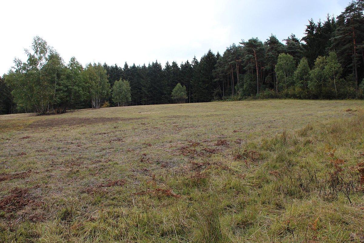Heidefläche in der Komper Heide
