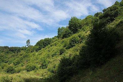 verbuschende Blockschuttdurchsetzte Fläche an der Wolkenburg (Siebengebirge)