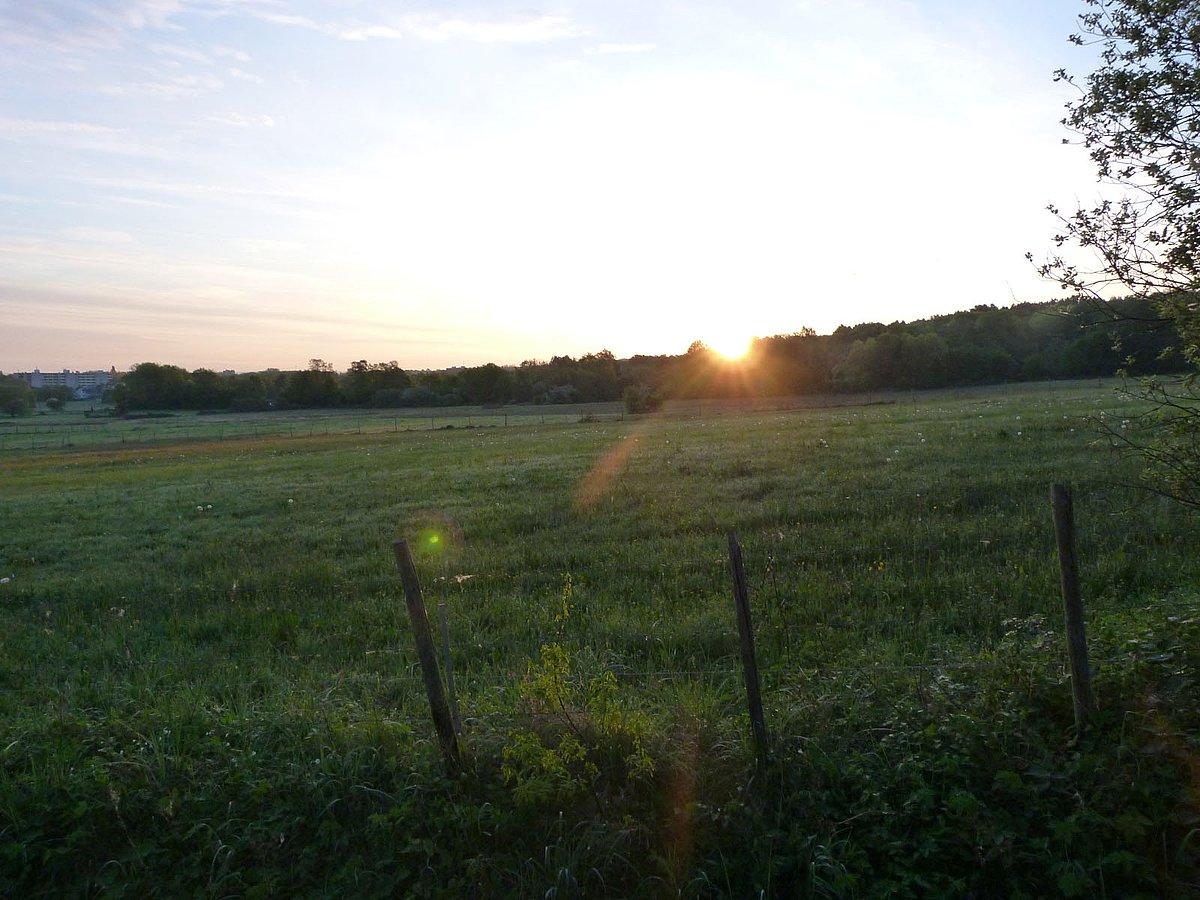 Sonnenaufgang in den Kohlkaulwiesen