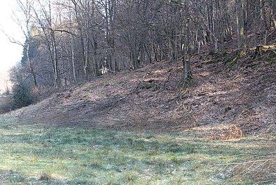 Teilgerodeter Hang Eudenberg