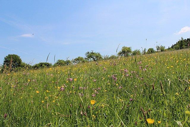 Artenreiches Grünland und Obstweiden am Ortsrand von Dreisel