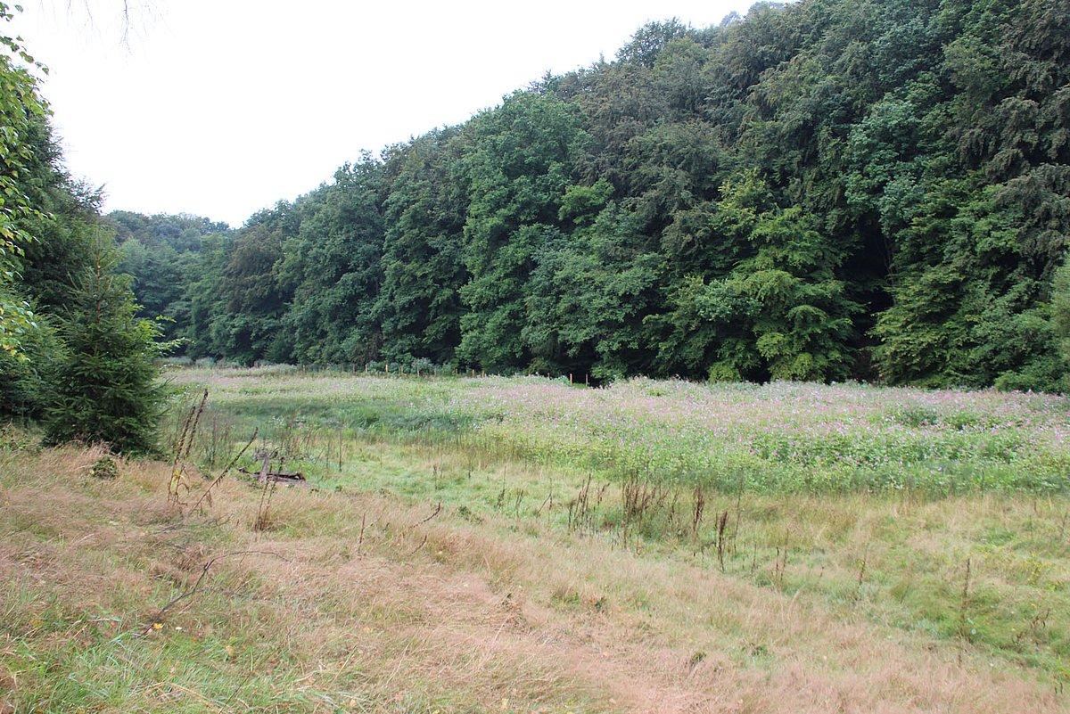 Von Hangwäldern umgebene Feuchtwiese