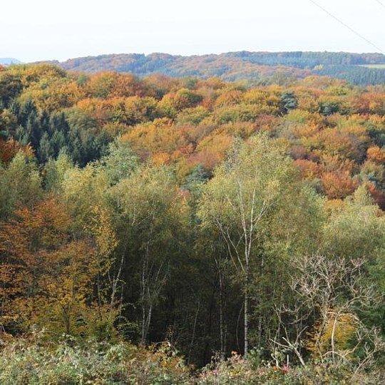 Herbstlicher Blick auf die bewaldeten Hänge des Krabachtales