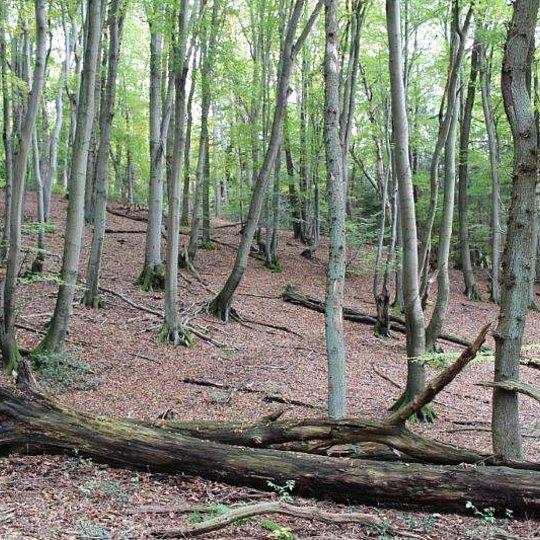 Totholzreicher Laubwald im Darscheider Bachtal