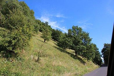 Bäume am Kellerberg