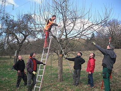 Ausbildung der Obstbaumwarte