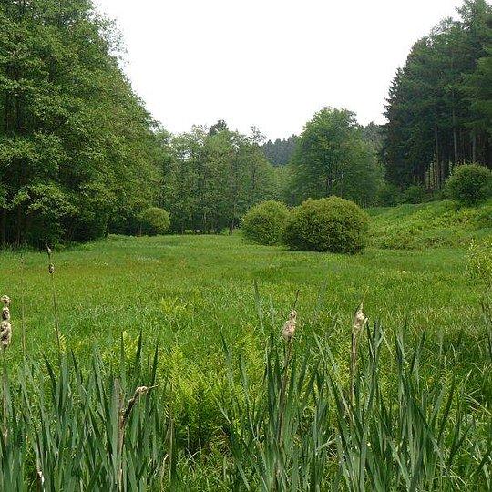 Feucht- und Nassgrünland im Wohmbachtal