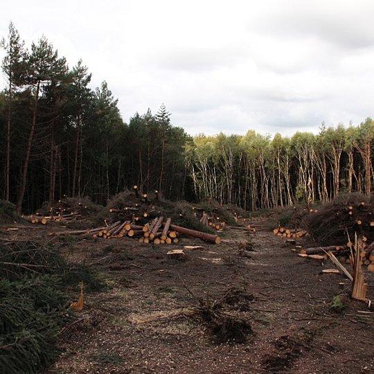 Holzaufarbeitung Komper Heide