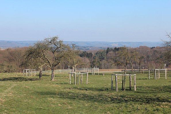 Neue Obstbäume in Hennef - Darscheid