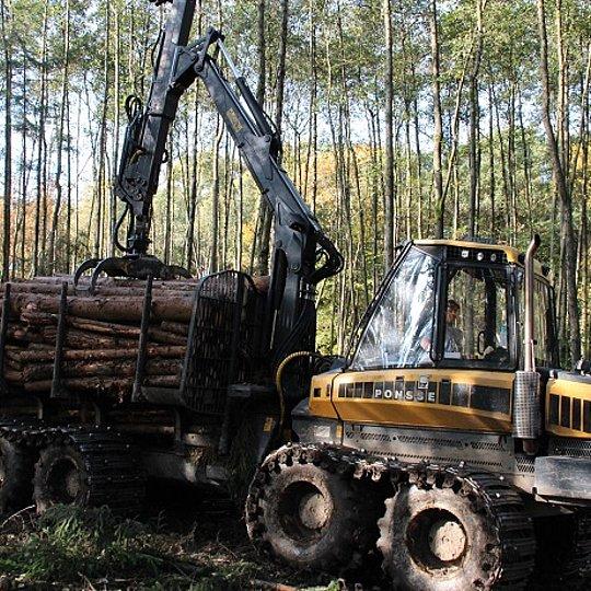 Abtransport Holz