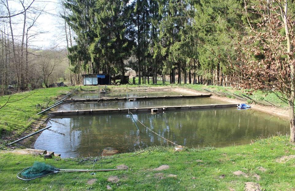 Die Teichanlage vor Beginn der Arbeiten